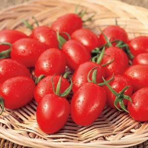 サカタのタネ トマト アイコ ペレット200粒