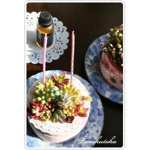 ■デコトハ ペティットケーキ(小さな多肉のケーキ)  ●サプライズプレゼントに ●大切な人に、母の日...