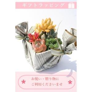 ギフトラッピング【S】|tanikutoha