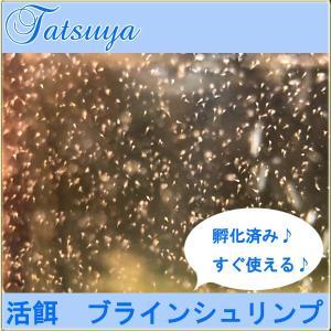 孵化済み!ブラインシュリンプ 500ml(海水でお届け) 活餌・生餌|tatsuya-fish