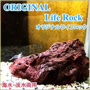 LifeRock竜屋オリジナル M バクテリア定着に!海水・淡水用 tatsuya-fish
