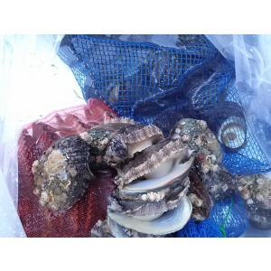 愛媛特産品・産地直送 宇和海産 魚介類詰め合わせお買い得お任せセット 5kg前後|tattan-sougouseikatu