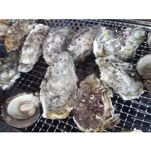 愛媛特産品・産地直送 宇和海産 御荘牡蠣(ミショウカキ) 4kgセット|tattan-sougouseikatu|02