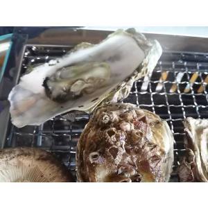 愛媛特産品・産地直送 宇和海産 御荘牡蠣(ミショウカキ) 4kgセット|tattan-sougouseikatu|03