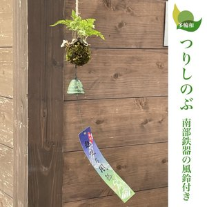 つりしのぶ(南部鉄器の風鈴付き)(西洋しのぶ・ダバリア)/無料ギフトラッピングOK(7cm)