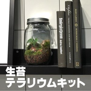 苔 テラリウムキット インテリア雑貨 グリーンプラネット 自宅 オフィス 店舗に癒しと彩りを添えます 手作り 簡単 プレゼント
