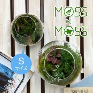 苔 テラリウム  観葉植物 インテリア雑貨 グリーンプラネット MOSS×MOSS モスモス Sサイズ 自宅 オフィス 店舗 癒し おしゃれ プレゼント ラッピング