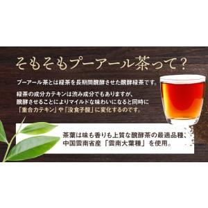 プーアール茶 (プーアル茶)35個入  お茶 tealife 09