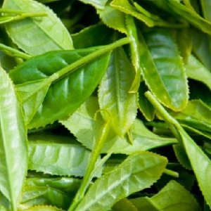 桑の葉 国産 粉末 100g×3袋 お得用|tegeyokaichiba|03