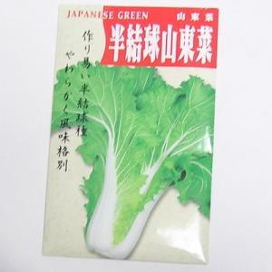 在来種/固定種/野菜のタネ「半結球山東菜 5ml 約1200粒」畑懐〔はふう〕の種メール便可
