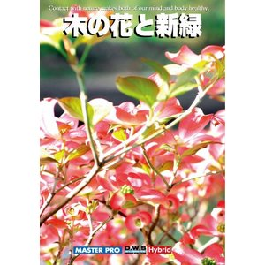 写真素材集 木の花と新緑|temptation