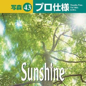 写真素材集 写森 プロ仕様 Vol.43 木漏れ日|temptation