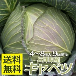兵庫県 キャベツ 4〜8玉 9kg前後