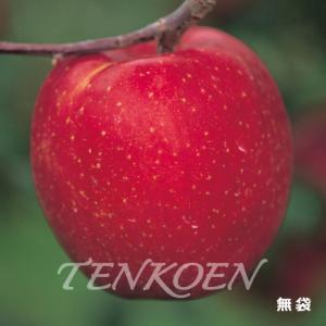 りんご あいかの香り(あいかのかおり) 苗木 裸苗【株式会社 天香園】|tenkoen
