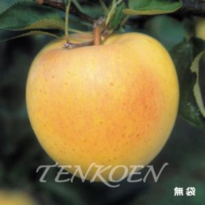 りんご ぐんま名月(ぐんまめいげつ)苗木 裸苗【株式会社 天香園】|tenkoen