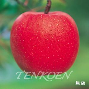 りんご らくらくふじ(三島ふじの選抜系)苗木 裸苗【株式会社 天香園】|tenkoen