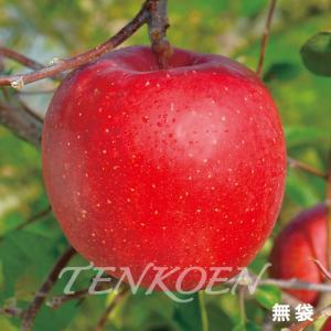 りんご 遠山三系(えんざんさんけい)(天頂三系)苗木 裸苗【株式会社 天香園】|tenkoen