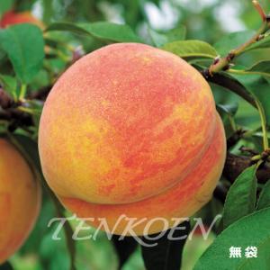 もも桃 ラストゴールド(こがね名月)苗木 裸苗【株式会社 天香園】|tenkoen