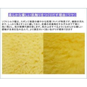 ボディブラシ (馬毛・長さ24cm) と天然海綿スポンジ (ソフトシルク種) のお買得セット|tennen-sponge|07