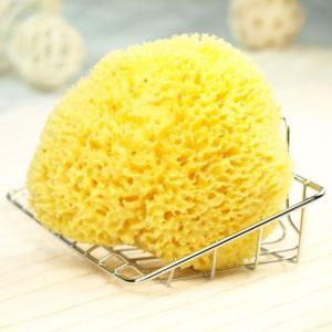 スポンジトレイ付きセット  天然海綿ボディスポンジ − ハニコム種クィーンサイズ(約14-16cm)<Glande>|tennen-sponge