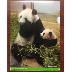 上野動物園パンダ シャンシャン公開記念 クリアホルダーB|tenshi