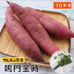 てしまの苗 さつまいも苗(イモヅル) 鳴門金時1束10本入り サツマイモ
