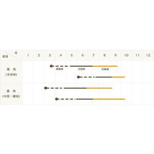 【てしまの苗】 H30年3月上旬より順次発送 1株 大玉トマト苗 ホーム桃太郎 断根接木苗 9cmポット【人気】野菜苗|teshimanonaeya|03