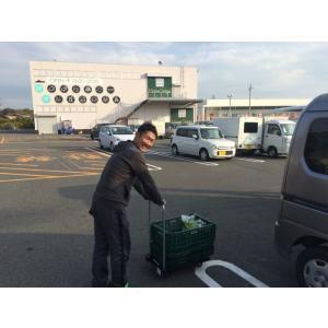 送料無料【スムージーにおススメ野菜のお試しセット】 農場長厳選・おまかせ野菜5袋セット|teshionoyumefarm