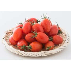 (産地直送)熊本県産アイコトマト 3kg ミニトマト とまとリコピン|14699||the-fuji|02