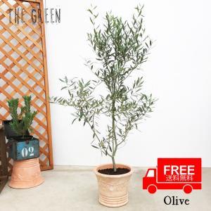 送料無料 オリーブ テラコッタ鉢植え 素焼き鉢 送料無料 オリーブの木 観葉植物 庭木 鉢植え