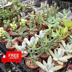 ■送料無料  種類はおまかせとなります。 24種類 72個のセット ミニ鉢植え 写真と種類が変わるこ...