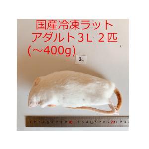 国産 冷凍ラット アダルト3L 2匹 高品質 冷凍餌