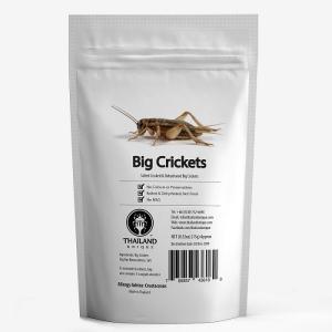 昆虫食 フタホシコオロギ  15g ビッククリケット 塩味 コオロギ タイランドユニーク社 昆虫食で一番人気のコオロギ【メーカー直送品の為代引き不可】|threestar