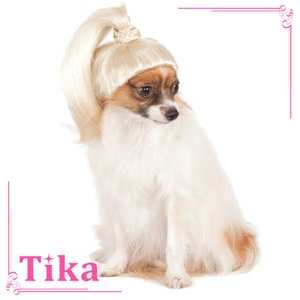 ペット コスプレ 犬用 Tika ティカ ポニーテール ウィッグドッグコスチューム 犬用衣装 かわい...
