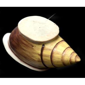 ゲロゲロ笛【貝】 / 民族楽器、ゲロゲロ笛、笛、  民族楽器 【インドとアジアン民族楽器】