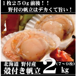 北海道 野付産 殻付き帆立 2kg(7〜9枚)|tkhs946
