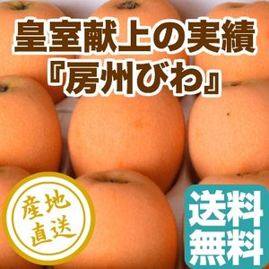 びわ フルーツ Fruits 皇室献上の品質 房州びわ 3Lサイズ12粒入化粧箱 千葉県富浦産 産地直送 送料無料