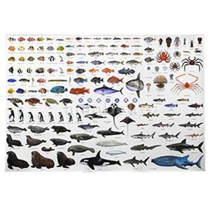 魚 図鑑 こども ポスター ザ・アクセス 水族館の人気者 A1サイズ|tnp-store