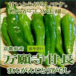 「京野菜」の「万願寺とうがらし」は、長さは約13cm!と巨大です。そしてヘタの下部のくびれが特徴的で...