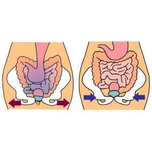 トコちゃんベルト2 Lサイズ 青葉 骨盤ベルト 妊娠中 産後 腰痛 安産|tocochan|14