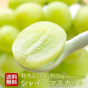 【特秀大玉朝摘み】山形県産 シャインマスカット 2Kg|tohoku-happy