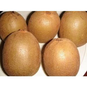 キウイフルーツ(ゴールドキウイ)1kg