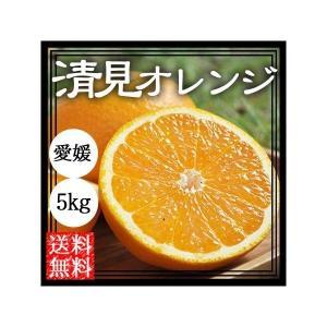 清見 清見オレンジ 5kg 送料無料 清見タンゴール 清見みかん 愛媛 産地直送 箱買い ノーワックス
