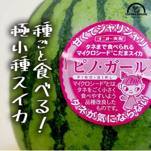 スイカ ピノガール 2玉入 ギフト プレゼント 小玉スイカ 熊本 送料無料 ひとりじめ bonbon...