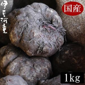 こんにゃく芋 1キロ 国産 新物 令和元年度秋産 みやままさり 仕入商品