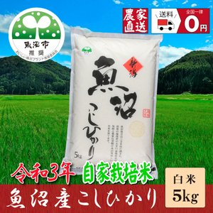 お米5kg 精米 29年産 魚沼産コシヒカリ5.0Kg 安心...