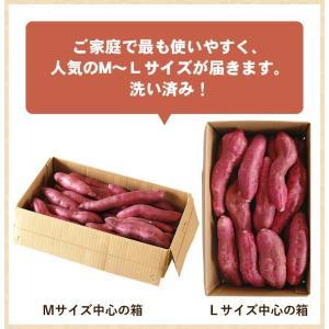 送料無料 なると金時 里むすめ 5kg さつまいも 鳴門市 里浦産 徳島県産 国産|tokushima-shop|03