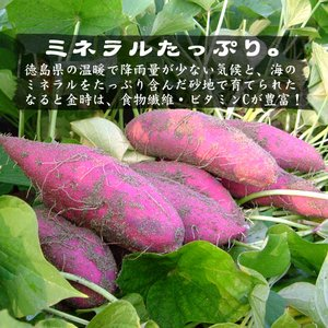送料無料 なると金時 里むすめ 5kg さつまいも 鳴門市 里浦産 徳島県産 国産|tokushima-shop|05