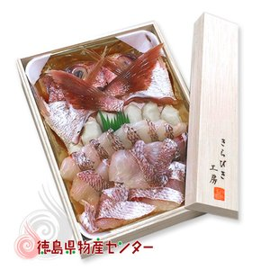 送料無料 きらびき工房 天然鳴門鯛 冷凍鯛しゃぶセット!冷凍便同梱不可/お中元/お歳暮/お祝い|tokushima-shop