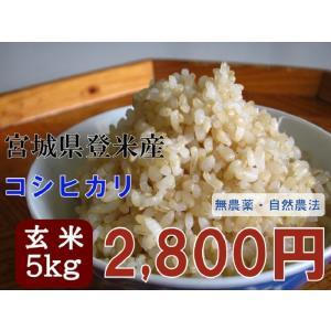 コシヒカリ 5kg 玄米 29年 宮城 登米 特別栽培米 米 農薬・化学肥料不使用|tomerice